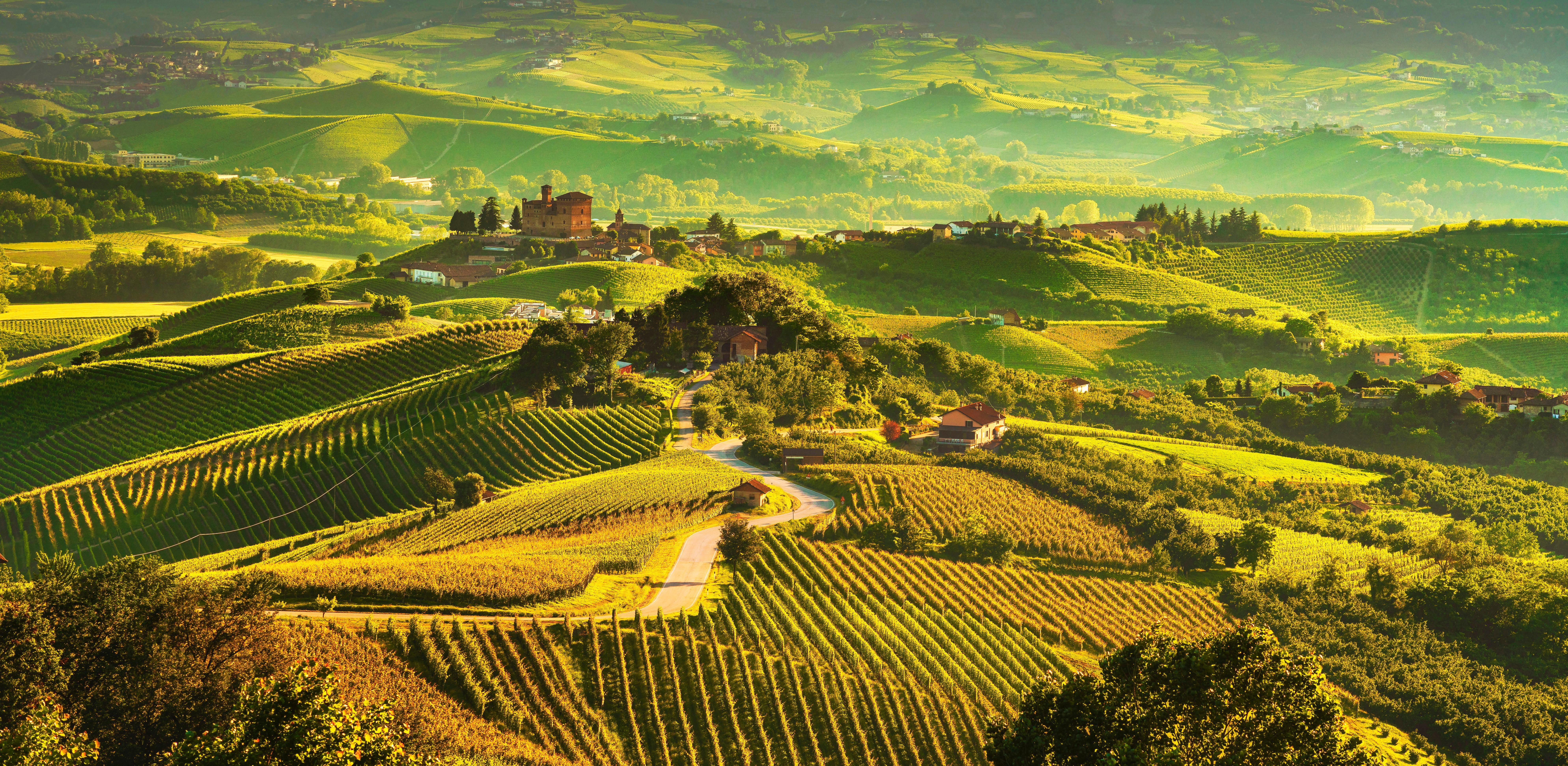 Виноградные поля в Италии, ВНЖ которой могут получить иностранцы